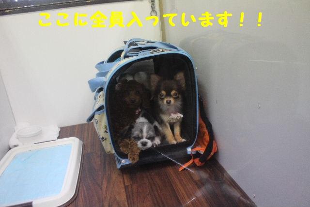断シャリ!!_b0130018_9465455.jpg
