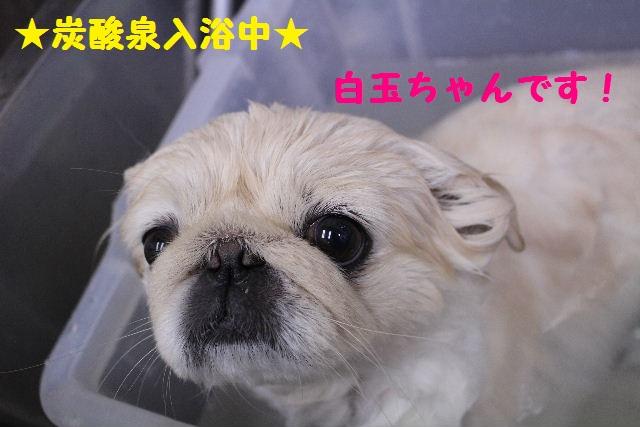 断シャリ!!_b0130018_9474776.jpg