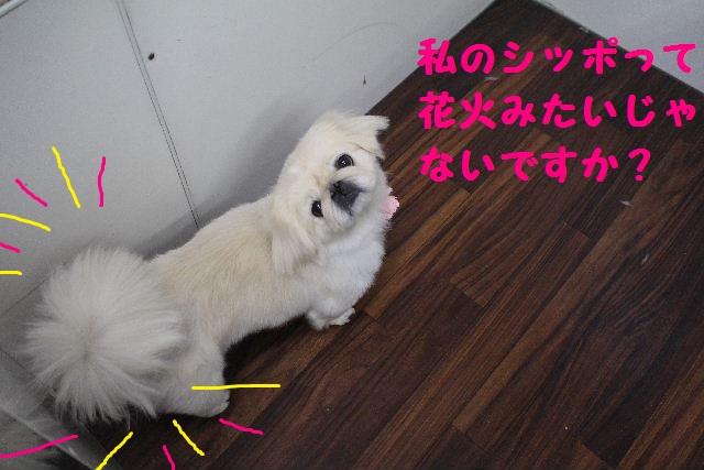 断シャリ!!_b0130018_9483172.jpg