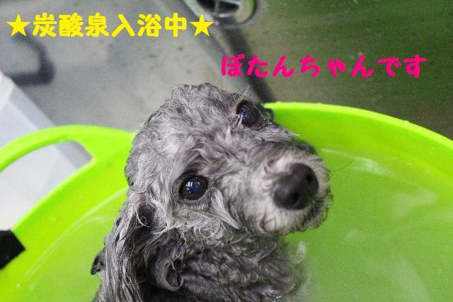断シャリ!!_b0130018_9491980.jpg