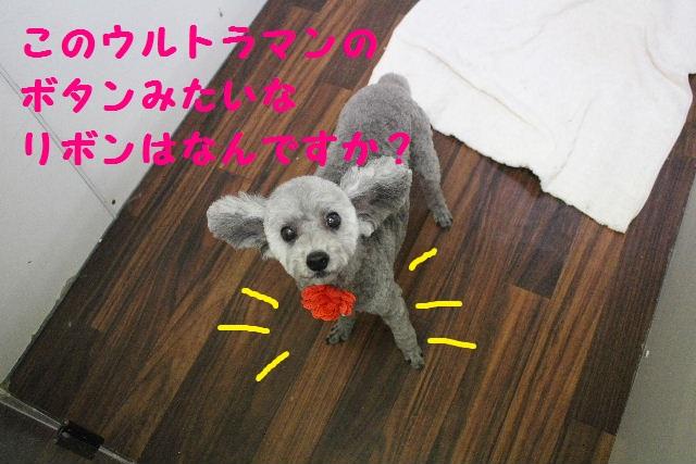 断シャリ!!_b0130018_9501390.jpg
