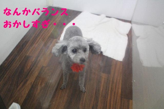 断シャリ!!_b0130018_9502118.jpg