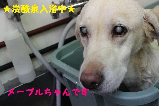 断シャリ!!_b0130018_9511474.jpg