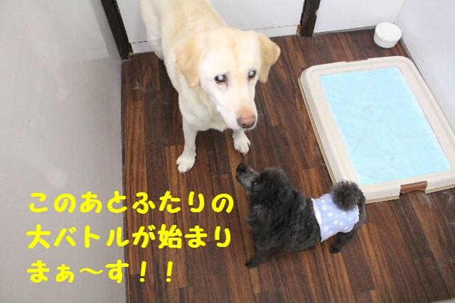 断シャリ!!_b0130018_9525858.jpg