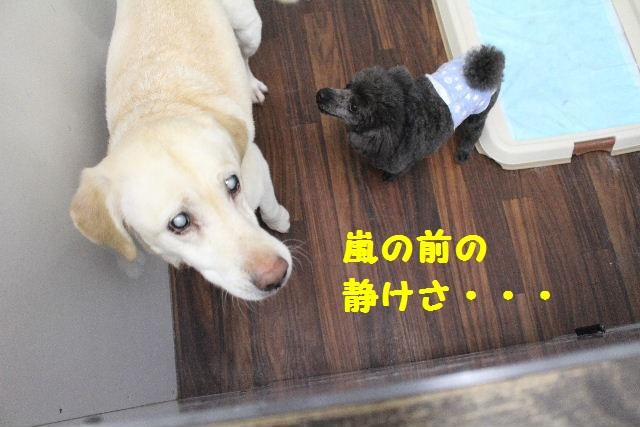 断シャリ!!_b0130018_953753.jpg