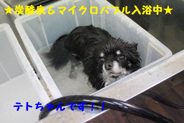 断シャリ!!_b0130018_9541923.jpg