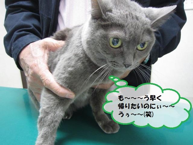 【慢性腎不全のネコちゃん】_b0059154_18201847.jpg