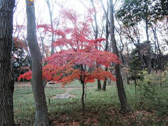 稲田堤の家の北側は自然遊歩道_c0195909_10215676.jpg