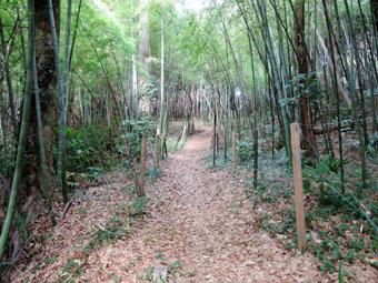 稲田堤の家の北側は自然遊歩道_c0195909_10221441.jpg