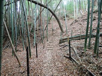 稲田堤の家の北側は自然遊歩道_c0195909_102274.jpg