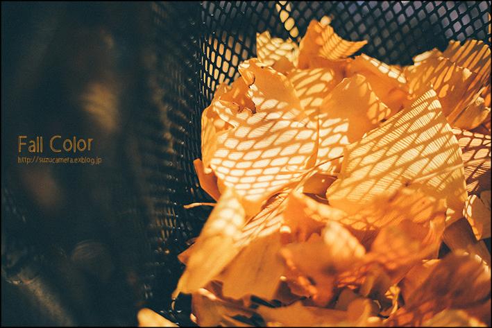 秋色いっぱい乗せて_f0100215_22434390.jpg