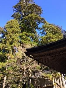 高野山は2℃_a0059035_00124824.jpg