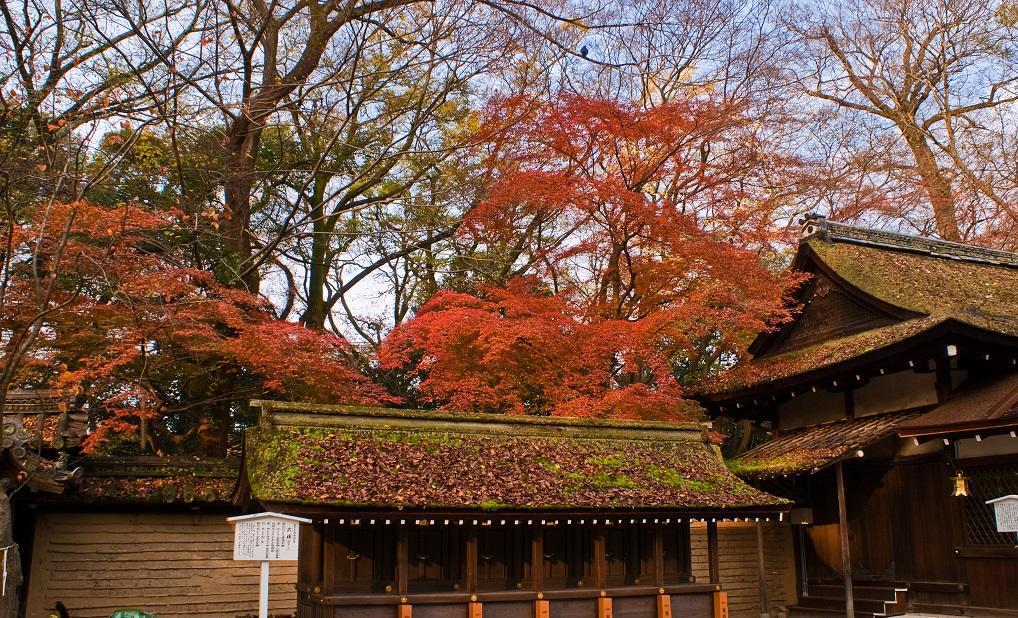 2016京都紅葉~河合神社_e0363038_1051188.jpg