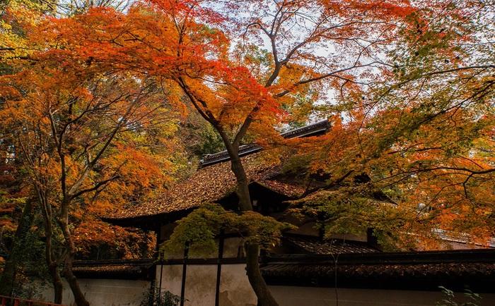2016京都紅葉~河合神社_e0363038_10514653.jpg