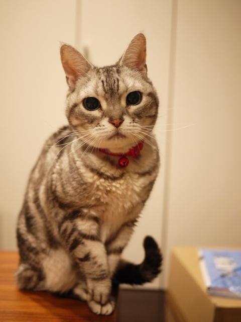 猫のお留守番 リリーちゃん編。_a0143140_19584919.jpg