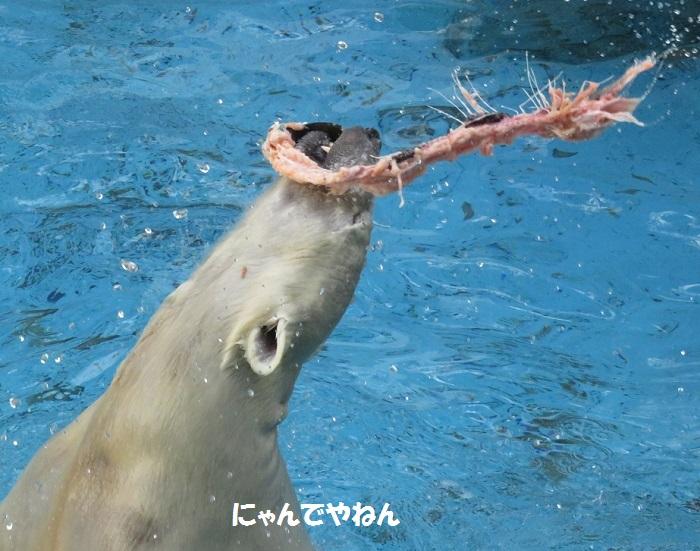 続き  鮭もほぼ食べ終わって_f0002743_058428.jpg