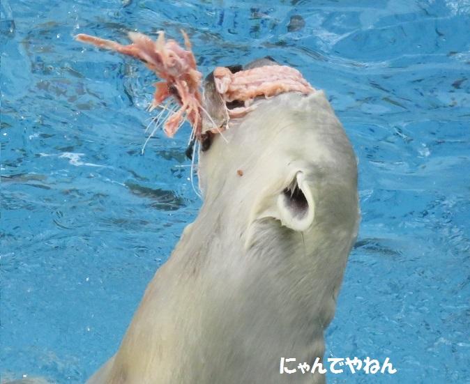 続き  鮭もほぼ食べ終わって_f0002743_0591730.jpg