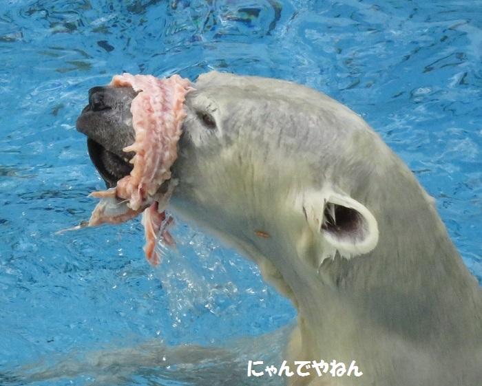 続き  鮭もほぼ食べ終わって_f0002743_0595123.jpg