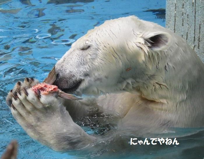 続き  鮭もほぼ食べ終わって_f0002743_12650.jpg