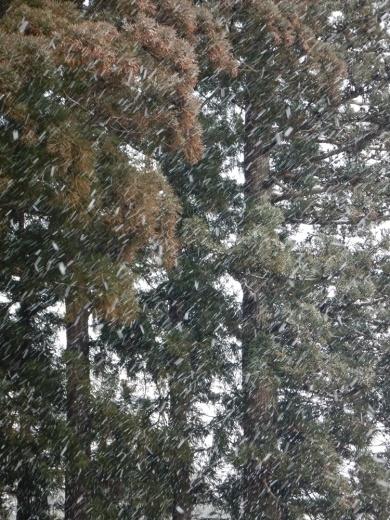 早朝除雪から_c0111229_18335793.jpg