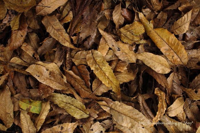秋の終わり_e0347431_23175278.jpg