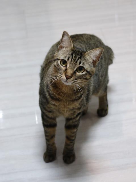 猫のお留守番 ココちゃん編。_a0143140_23332956.jpg