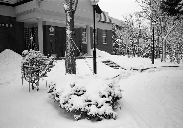 モンタナ松の雪吊り_c0182775_22534284.jpg