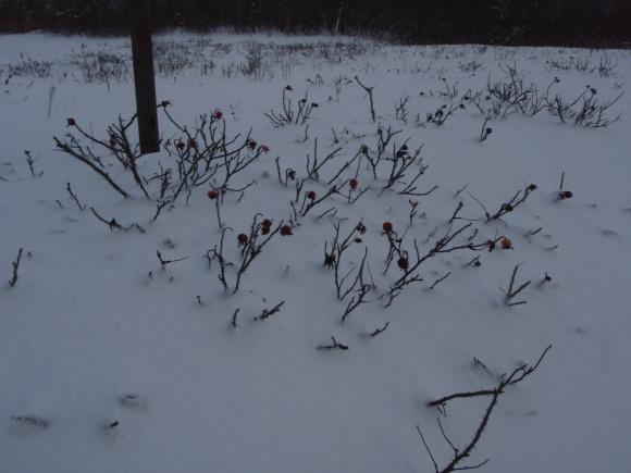 雪、あれ?_f0354435_17012021.jpg