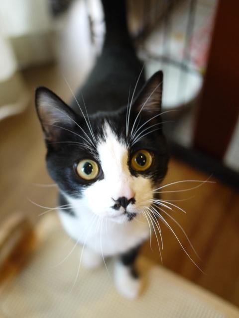 猫のお留守番 にこくん編。_a0143140_19193597.jpg