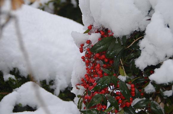 雪来る_c0202242_1142424.jpg