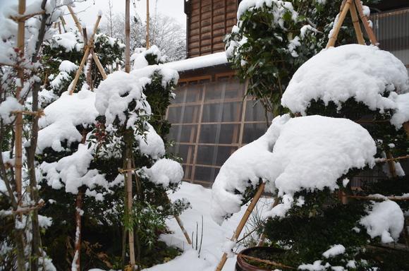 雪来る_c0202242_114661.jpg