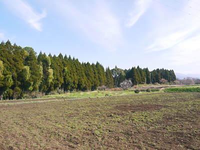 菊池水源里山ニンジン 平成28年度の無農薬・無化学肥料栽培のニンジンの発送をスタートします!_a0254656_17524675.jpg