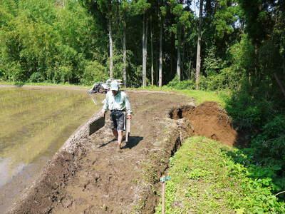 菊池水源里山ニンジン 平成28年度の無農薬・無化学肥料栽培のニンジンの発送をスタートします!_a0254656_1834297.jpg