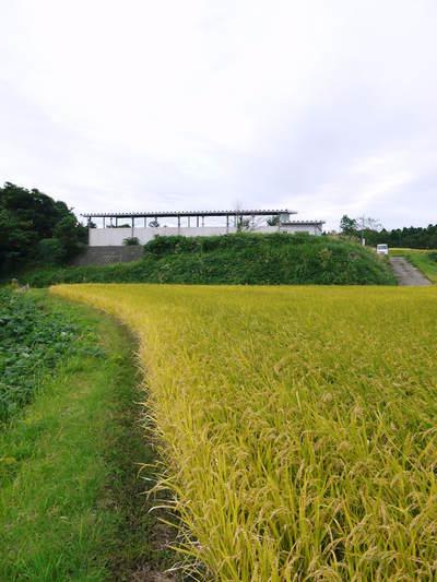 菊池水源里山ニンジン 平成28年度の無農薬・無化学肥料栽培のニンジンの発送をスタートします!_a0254656_18382279.jpg