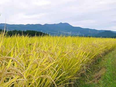 菊池水源里山ニンジン 平成28年度の無農薬・無化学肥料栽培のニンジンの発送をスタートします!_a0254656_18412761.jpg