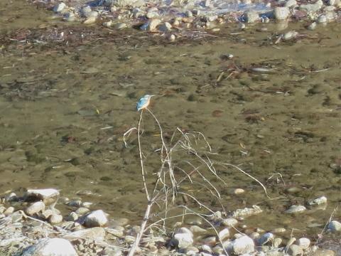河原の宝石_c0260460_10040810.jpg