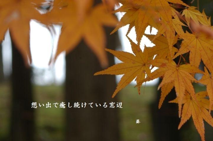 f0379160_20410211.jpg