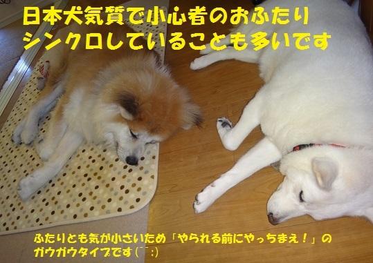 f0121712_01092078.jpg