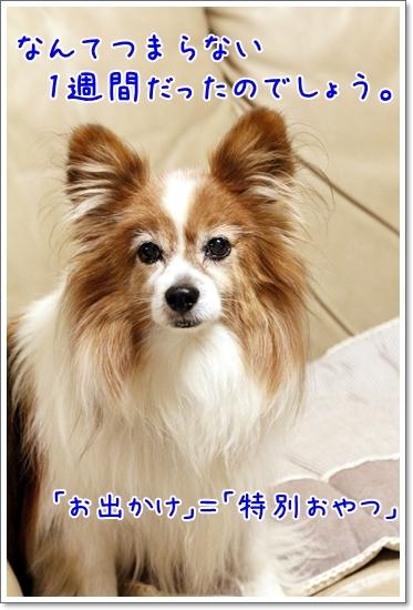 d0013149_00204416.jpg