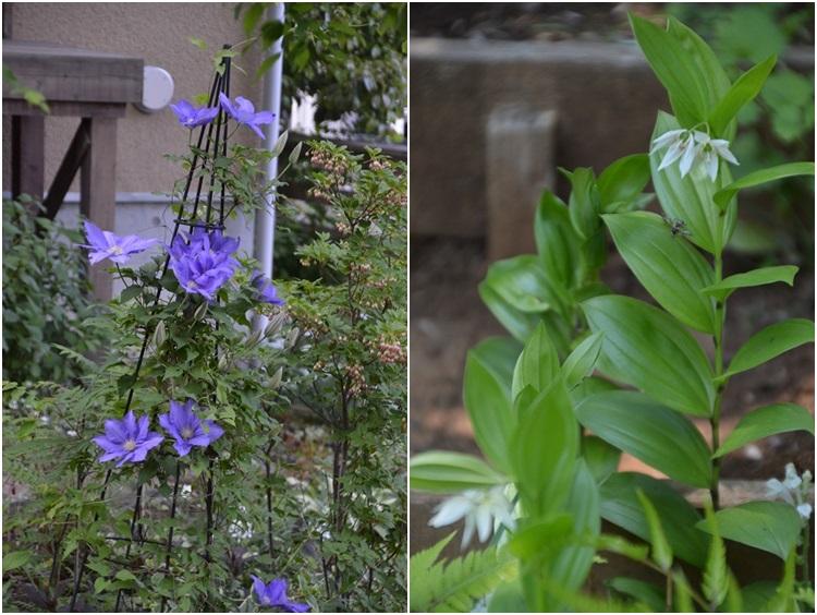 再び春画像…4月30日-5月1日の庭。_c0124100_1956283.jpg