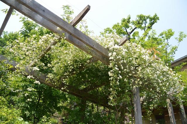 再び春画像…4月30日-5月1日の庭。_c0124100_1956942.jpg