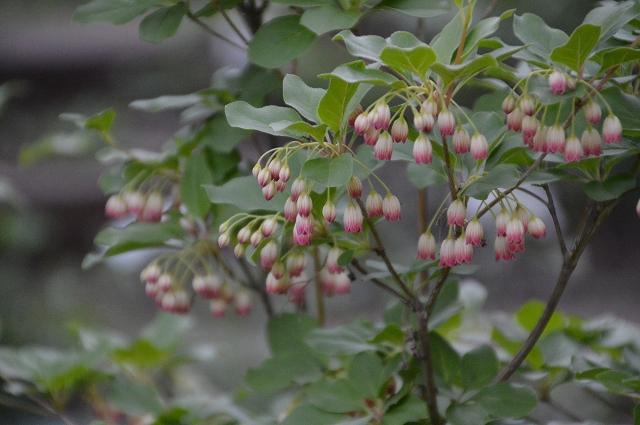 再び春画像…4月30日-5月1日の庭。_c0124100_19575142.jpg