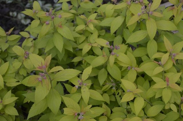 再び春画像…4月30日-5月1日の庭。_c0124100_19581814.jpg