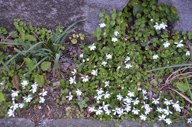 再び春画像…4月30日-5月1日の庭。_c0124100_1958434.jpg