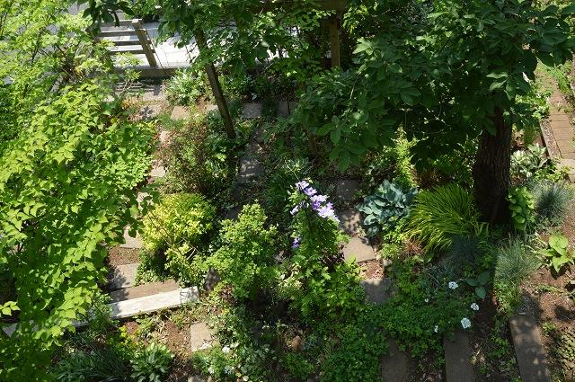 再び春画像…4月30日-5月1日の庭。_c0124100_19584734.jpg