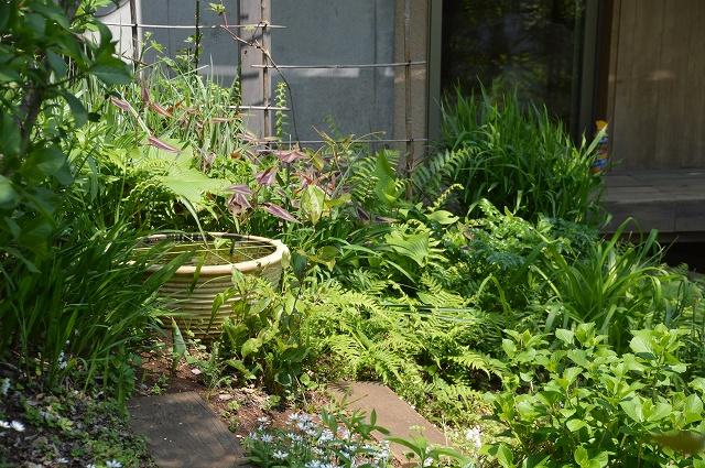 再び春画像…4月30日-5月1日の庭。_c0124100_19585866.jpg