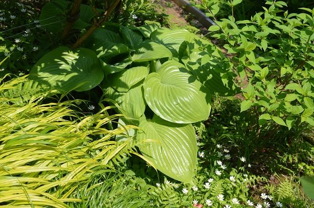 再び春画像…4月30日-5月1日の庭。_c0124100_19591123.jpg