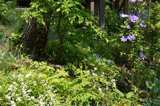 再び春画像…4月30日-5月1日の庭。_c0124100_19592447.jpg