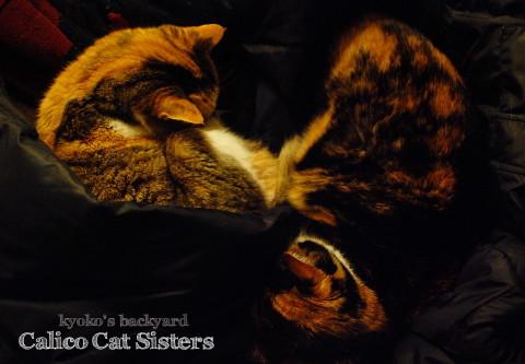 仲良く夕寝の三毛猫姉妹。夕飯前の大惨事。_b0253205_06482893.jpg