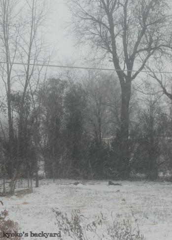 雪が降っても、あいかわらず_b0253205_07430135.jpg